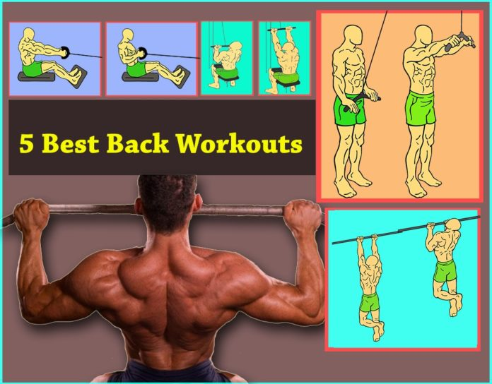 Back Workout cover image