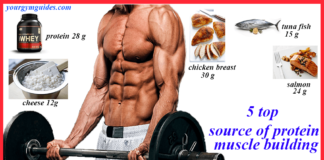 protein for muscle building