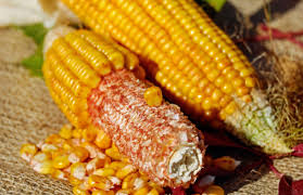 Corn high protein and nutrition values