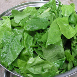 Spinach_leaves good source of iron and protein