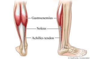 Anatomy Of The Calves muscles
