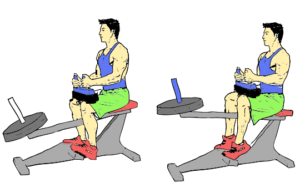 Seated Calf Raise exercise