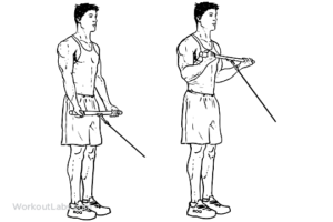 Cable bicep curls for arm size